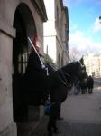 medium_Horse_Guard_fi.JPG