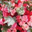medium_roses_rouges.jpg